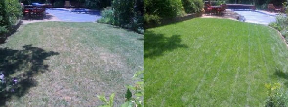 Local Organic Lawn Care Fort Worth TX
